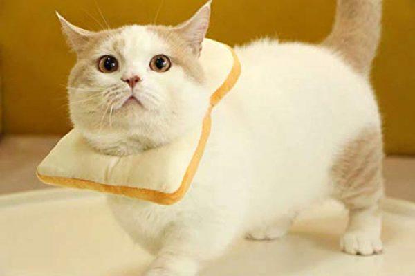 tablecat