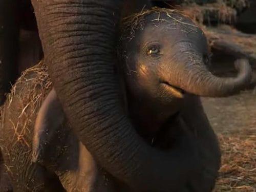 Dumbo-Mamma-500x375